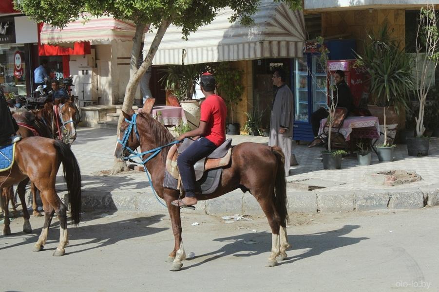 Лошади в Каире 3