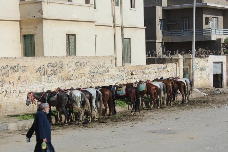 Лошади в Каире 1