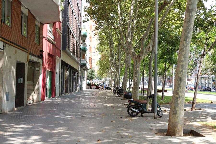 аллея в Барселоне