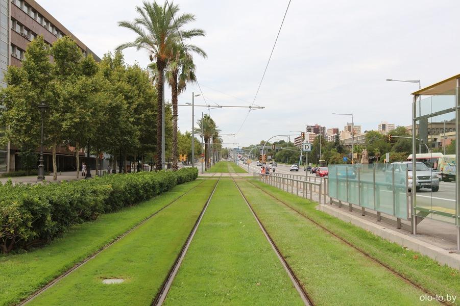 зеленая трамвайная дорога