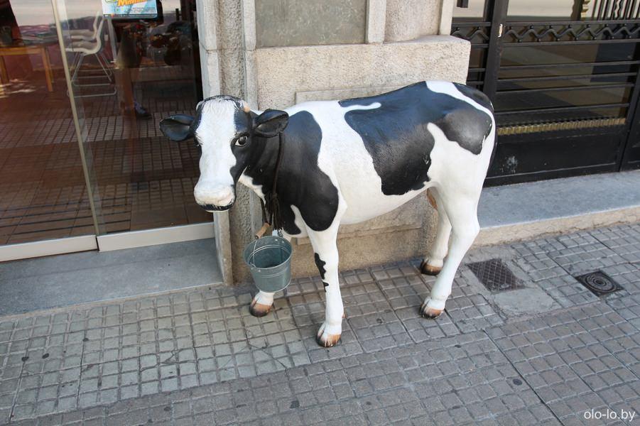 коровка на улицах Жироны