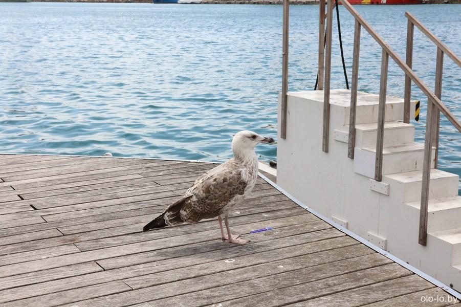 чайка в порту Барселоны