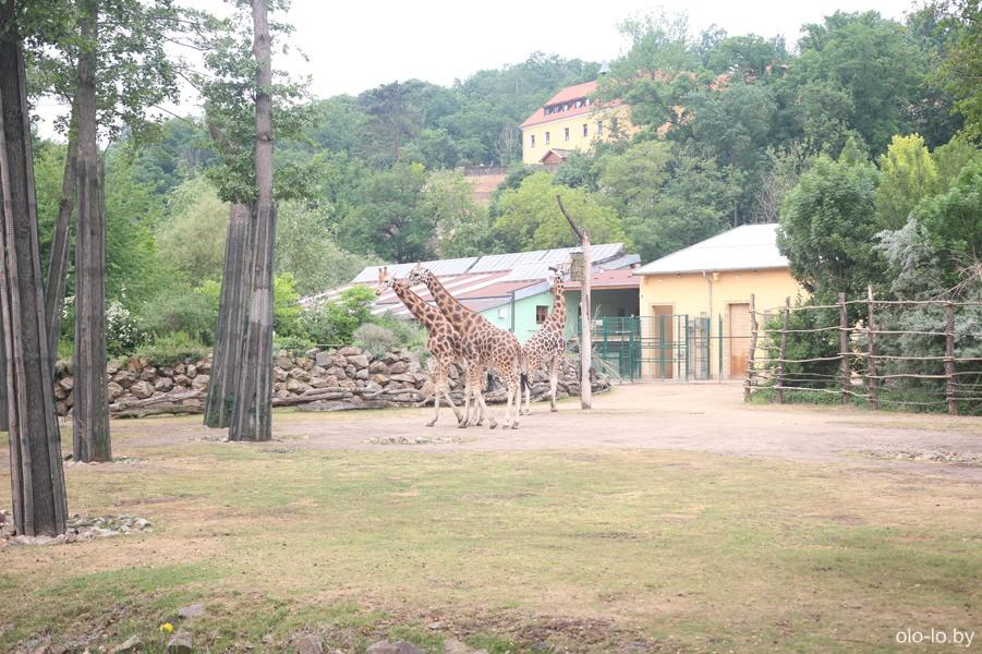 Пльзенский зоопарк, Пльзень