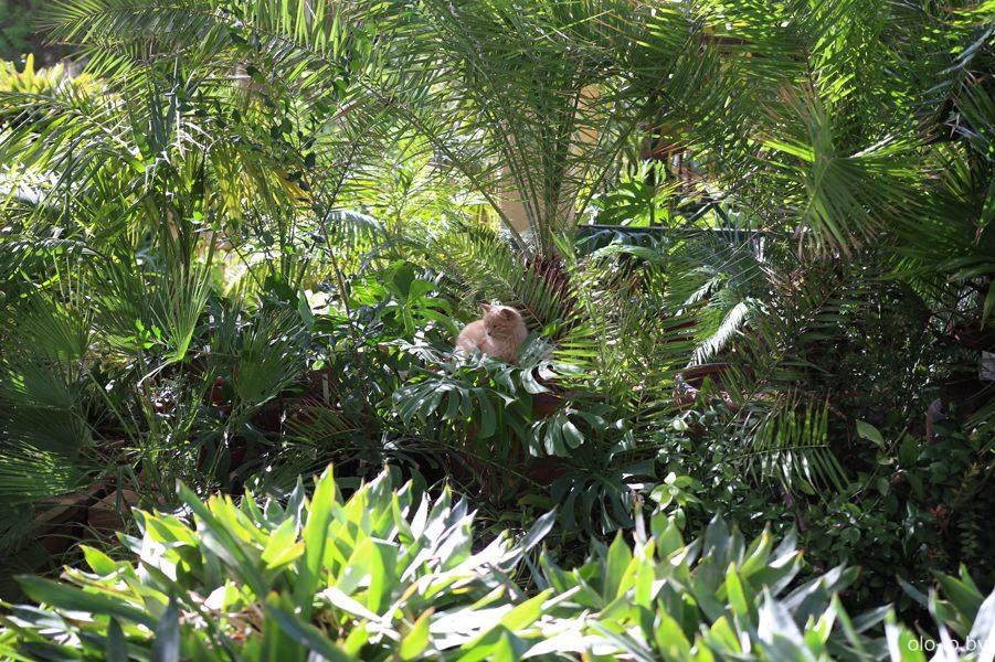 Ботанический сад, Флориана