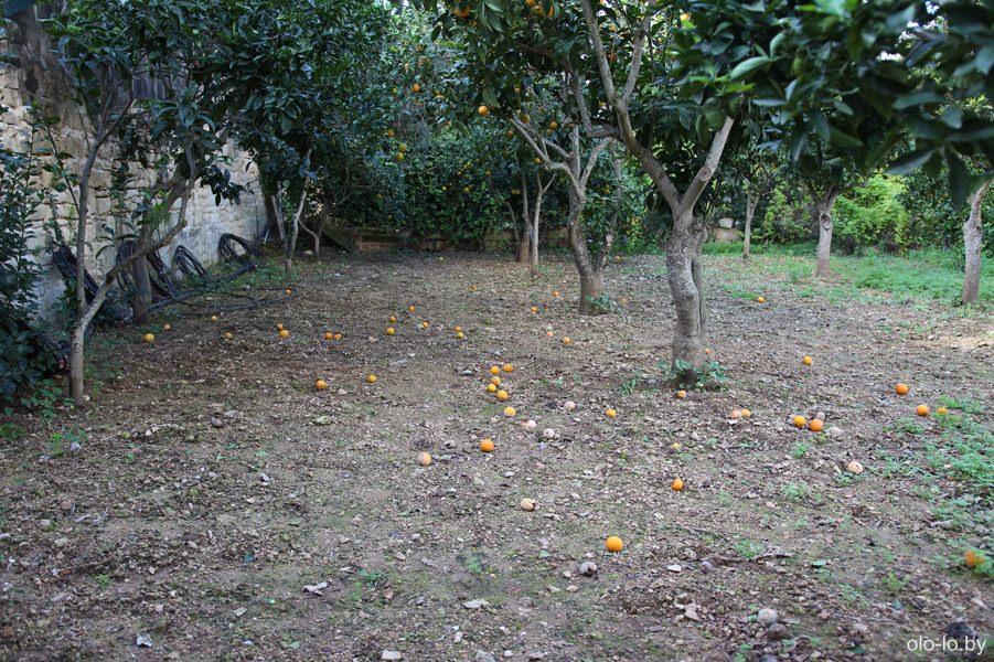 Ботанический сад Святого Антония, Бальцан