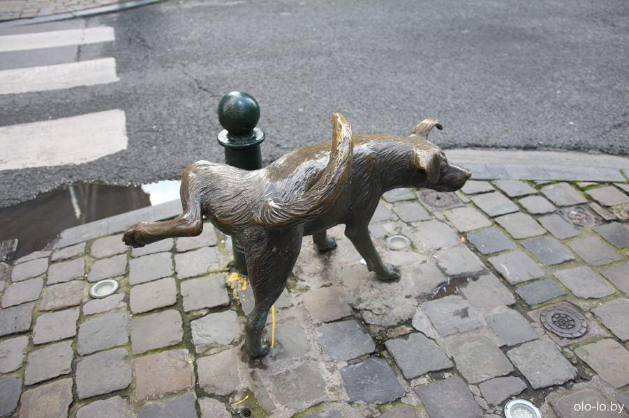 питающая собачка, Брюссель